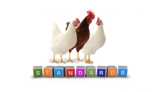 Nuovi standard per le galline Lohmann